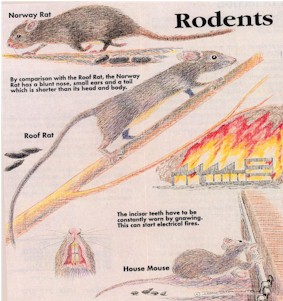 Rodents City Metro Pest Management